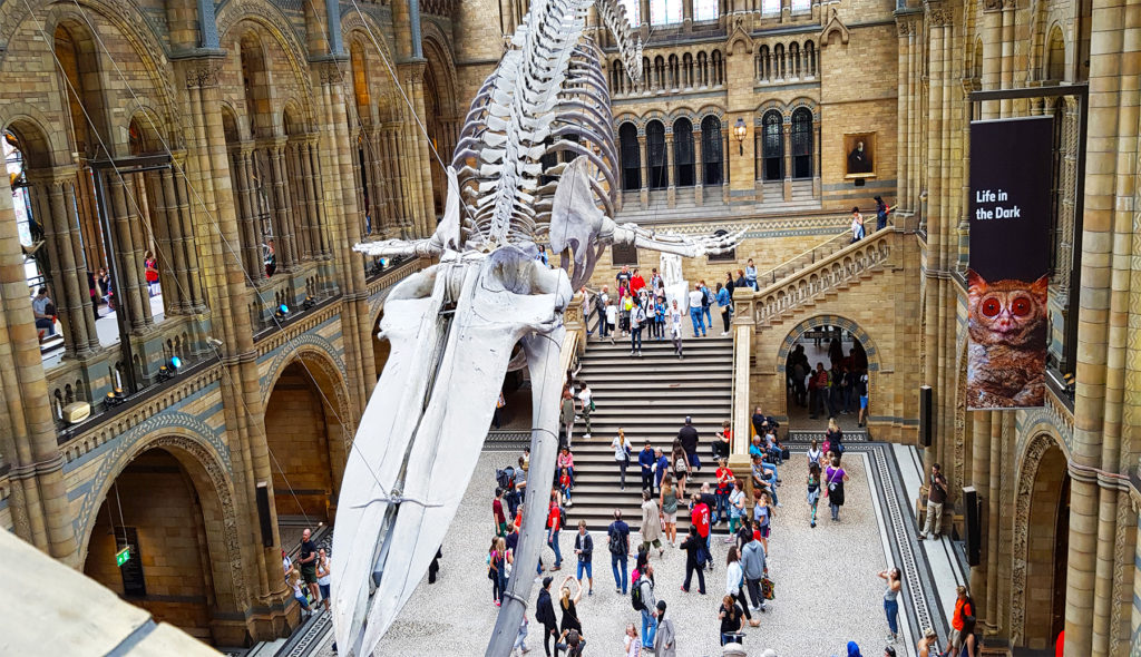11 London film locations you can visit (The Natural History Museum) - One Epic Road trip